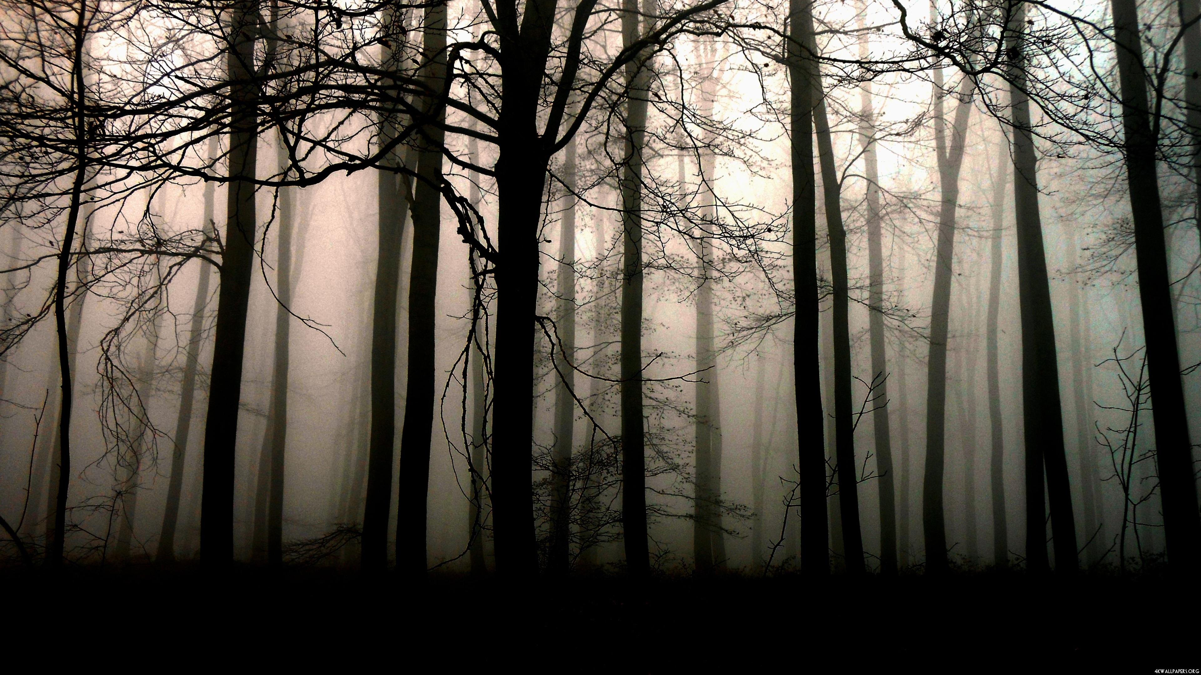 forest dark nature image