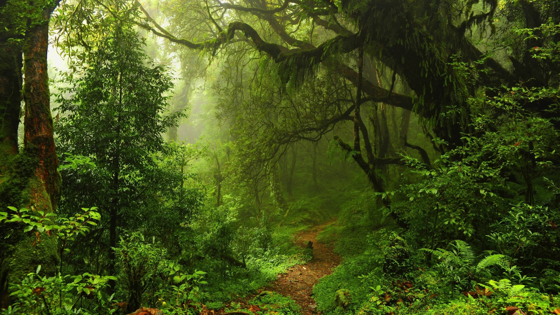 super natural Forest 4K Wallpapers