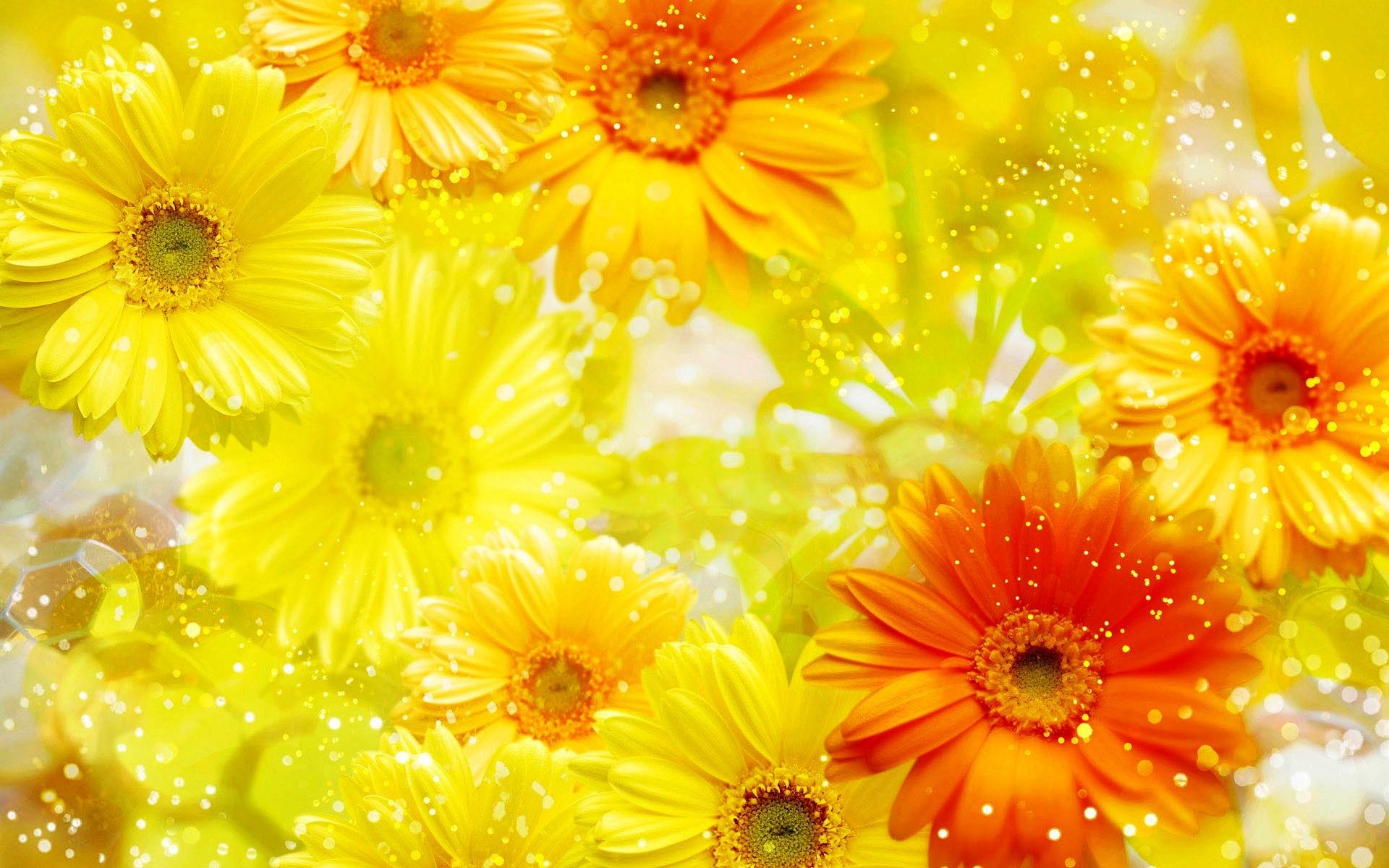 Flower Wallpaper Colorful Flower Wallpaper Image 17741