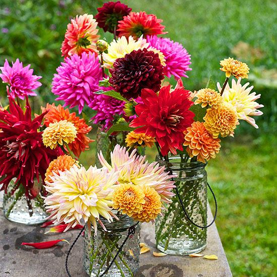 colorful Dahlia Flower image