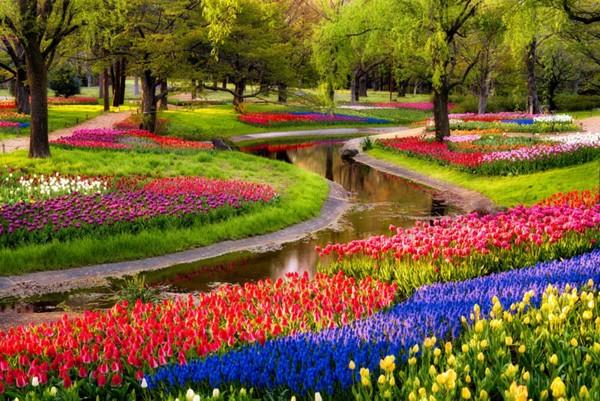 landscape nature Tulip Garden Images
