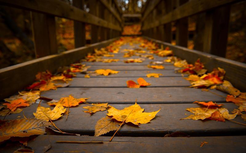 hd autumn nature image