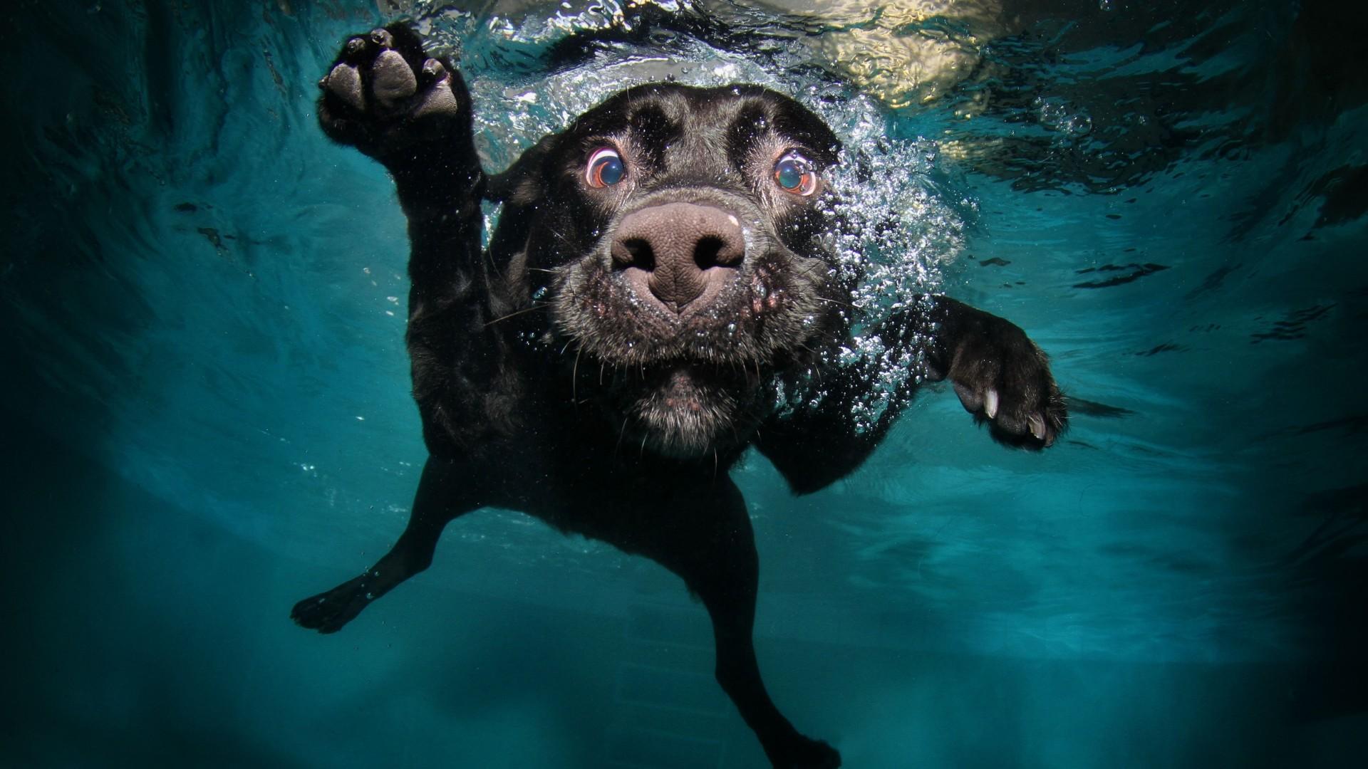 stunning 3d Funny Dog Wallpaper