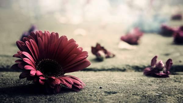 pink flower HD Vintage Background
