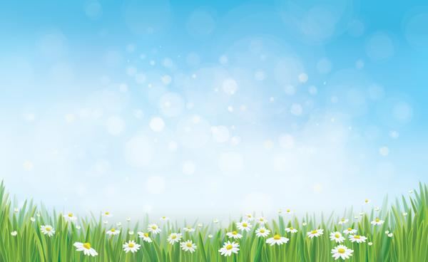 white daisy flower Spring image