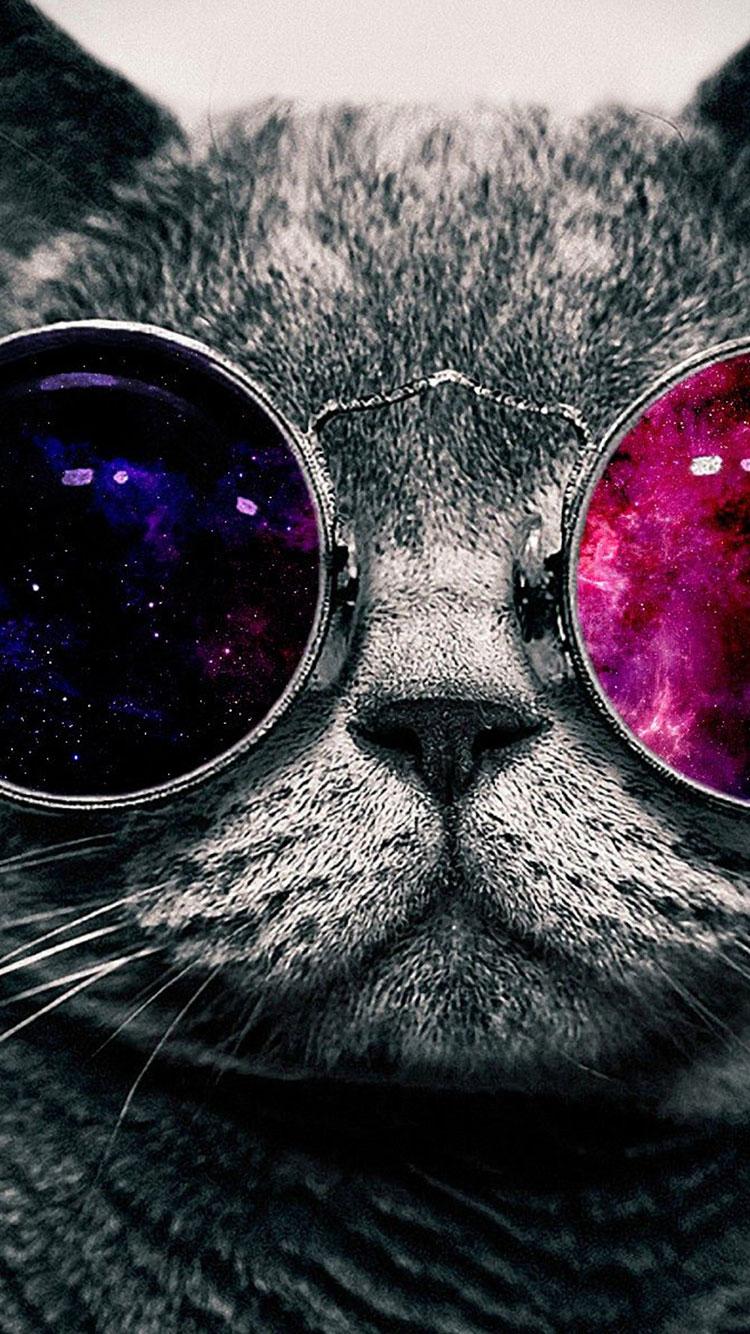 black cat for iphone wallpaper