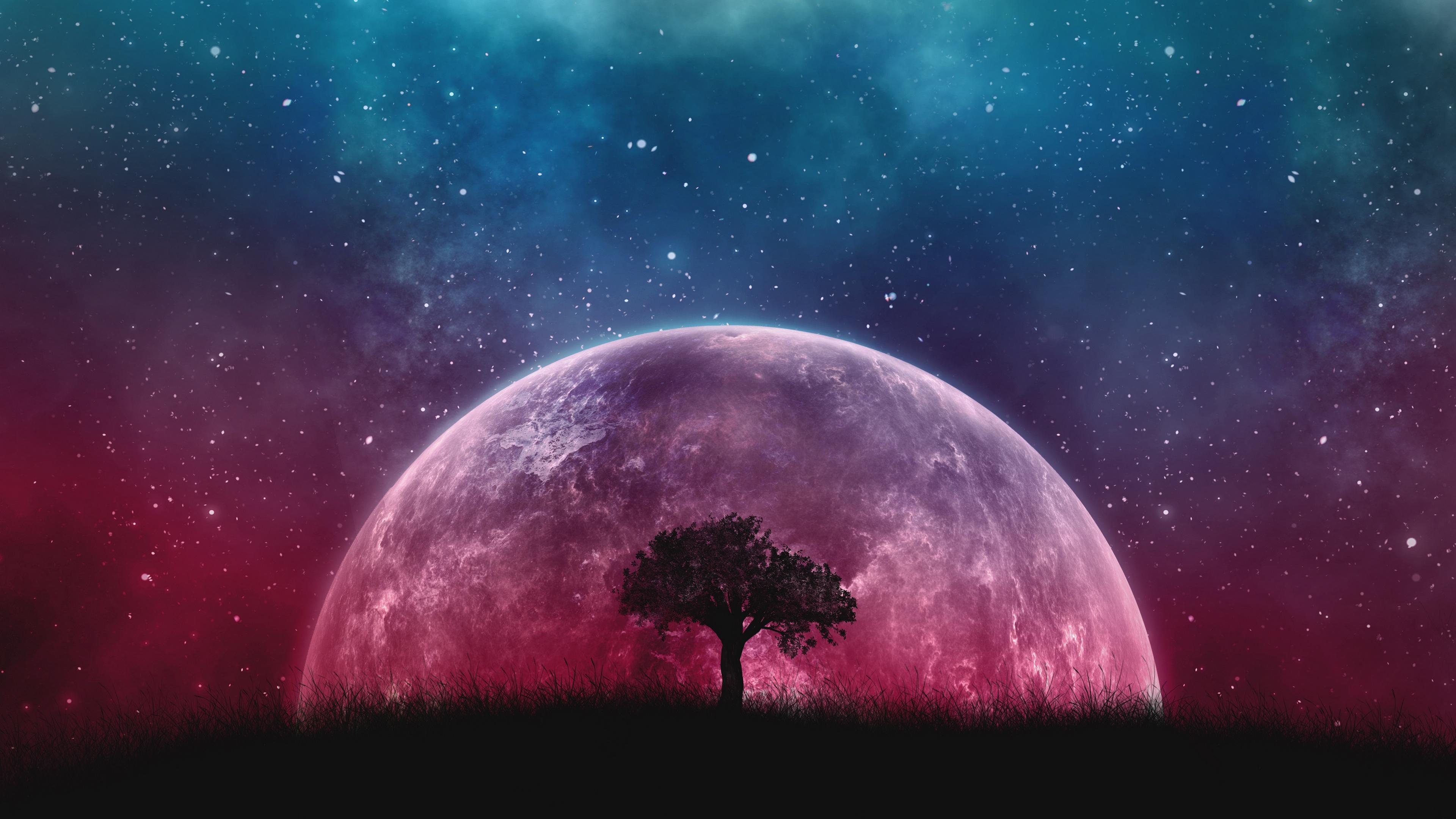 tree nature 4K Galaxy Wallpaper