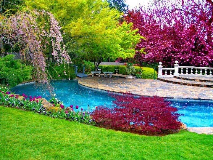 flower Natural Scene Background