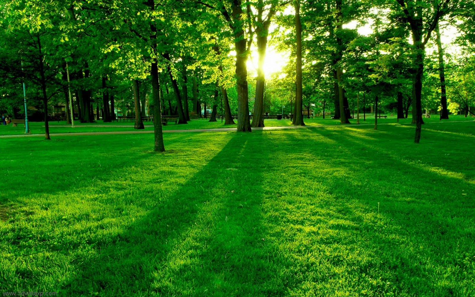 green tree Natural Scene Background