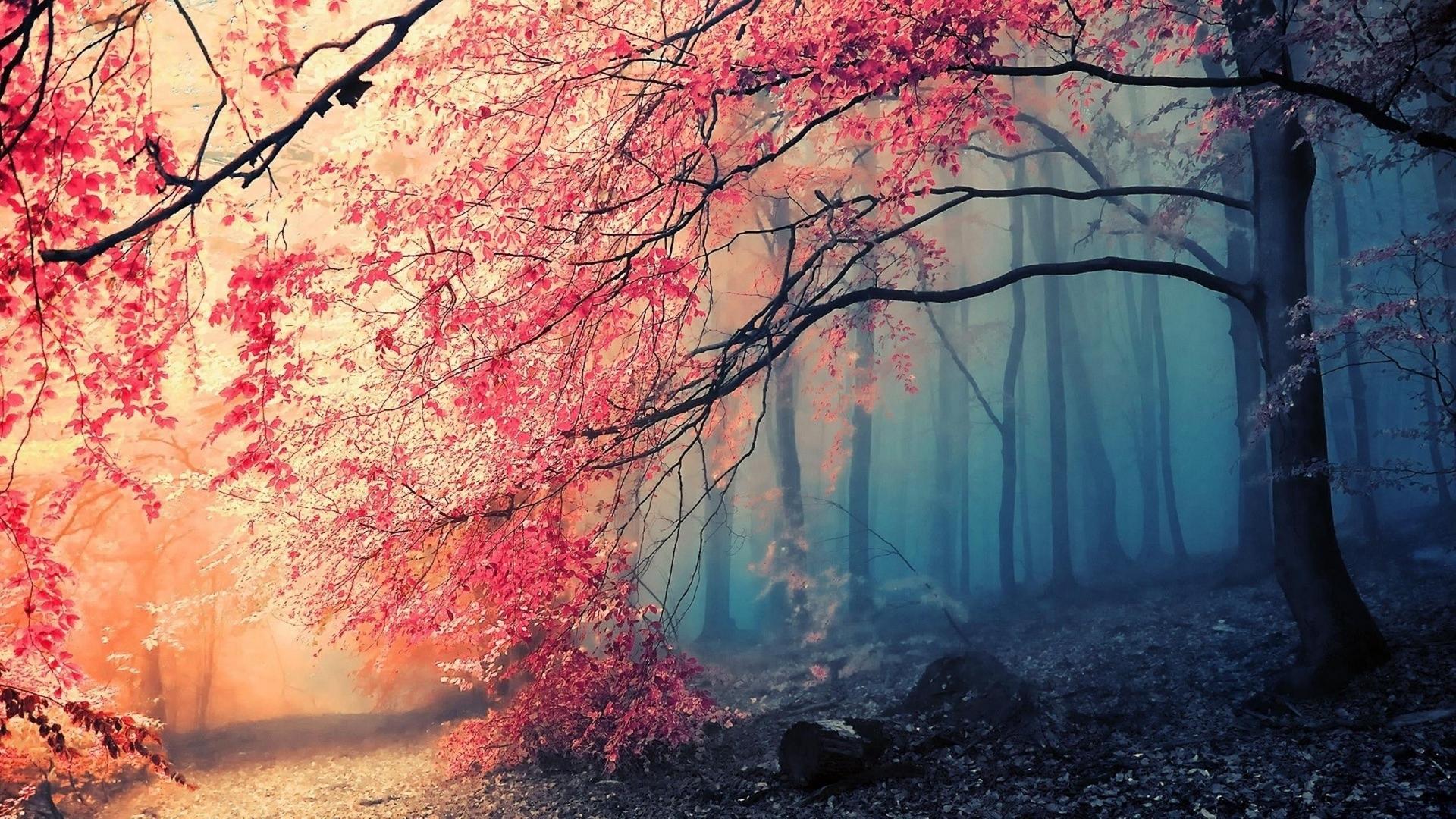 tree fog Full HD Wallpaper