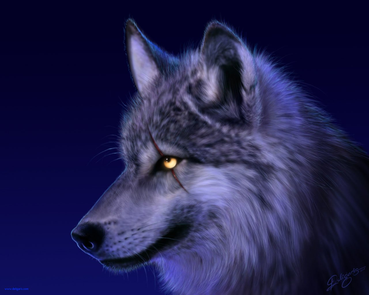 beautiful White Wolf Wallpaper