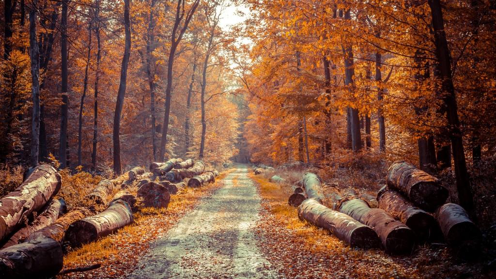 hd Autumn Wallpaper 4K