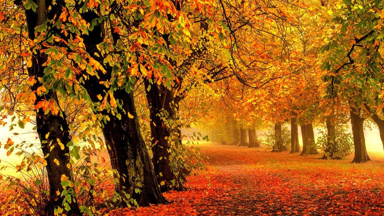 natuarl Autumn Wallpaper 4K