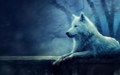 wonderful White Wolf Wallpaper