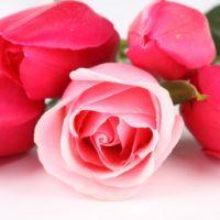 3d HD Pink Rose Wallpaper
