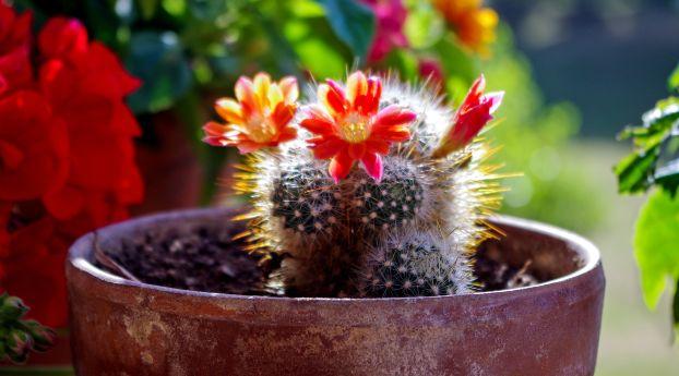 cool Cactus Flower Wallpaper