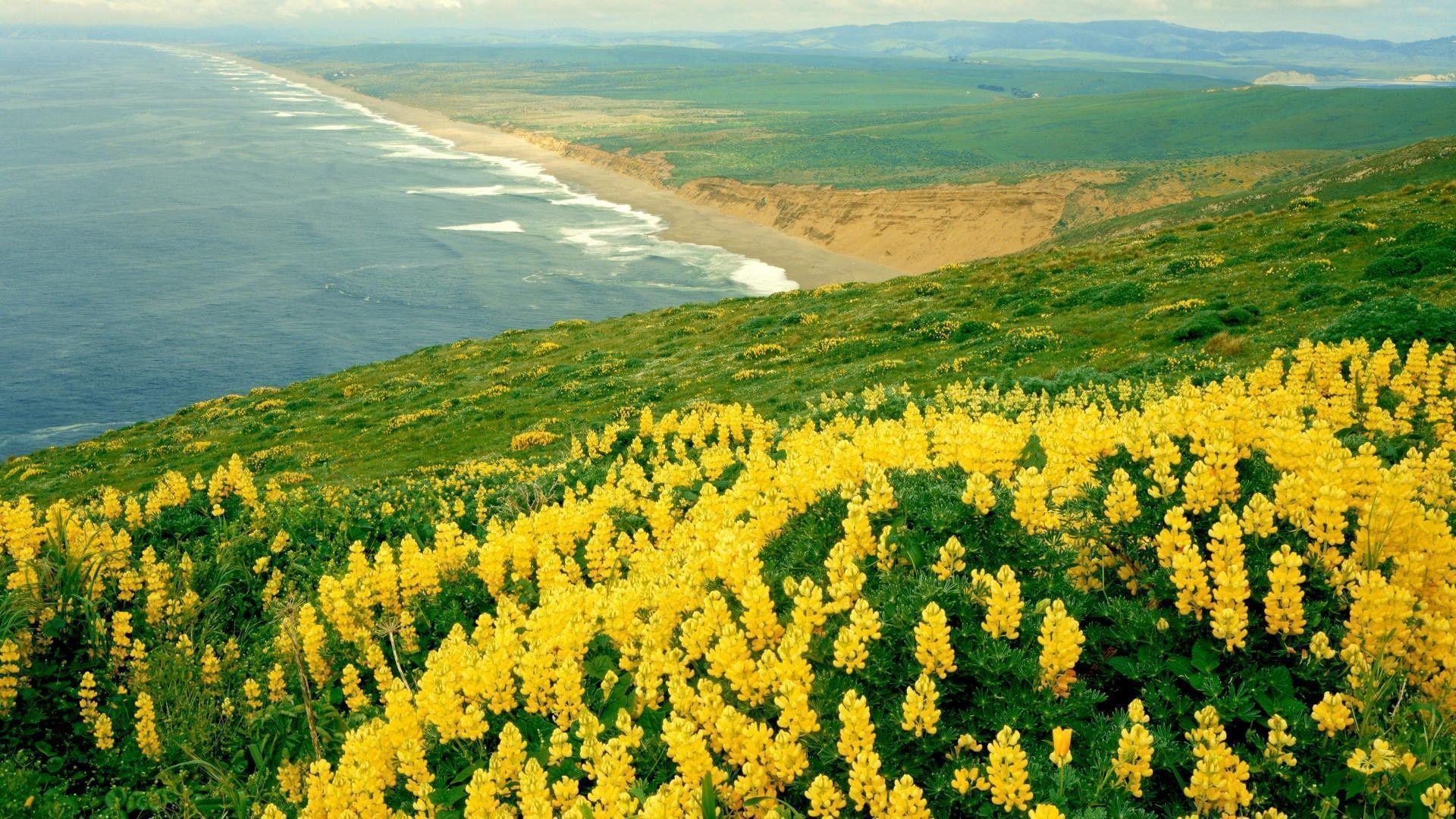 field nature Yellow Flowers Wallpaper