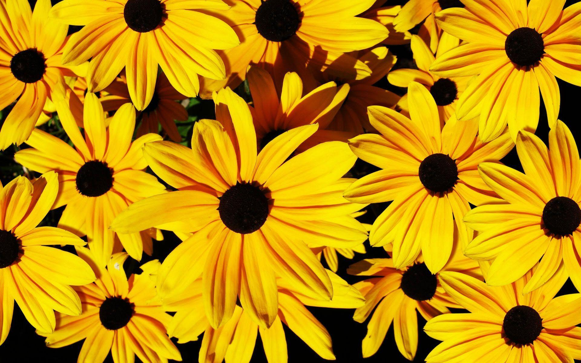 landscape Yellow Flowers Wallpaper