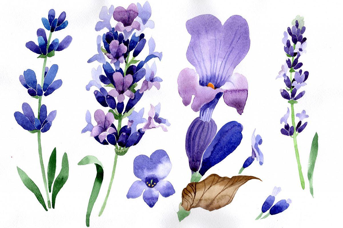 landscape nature Lavender Flowers