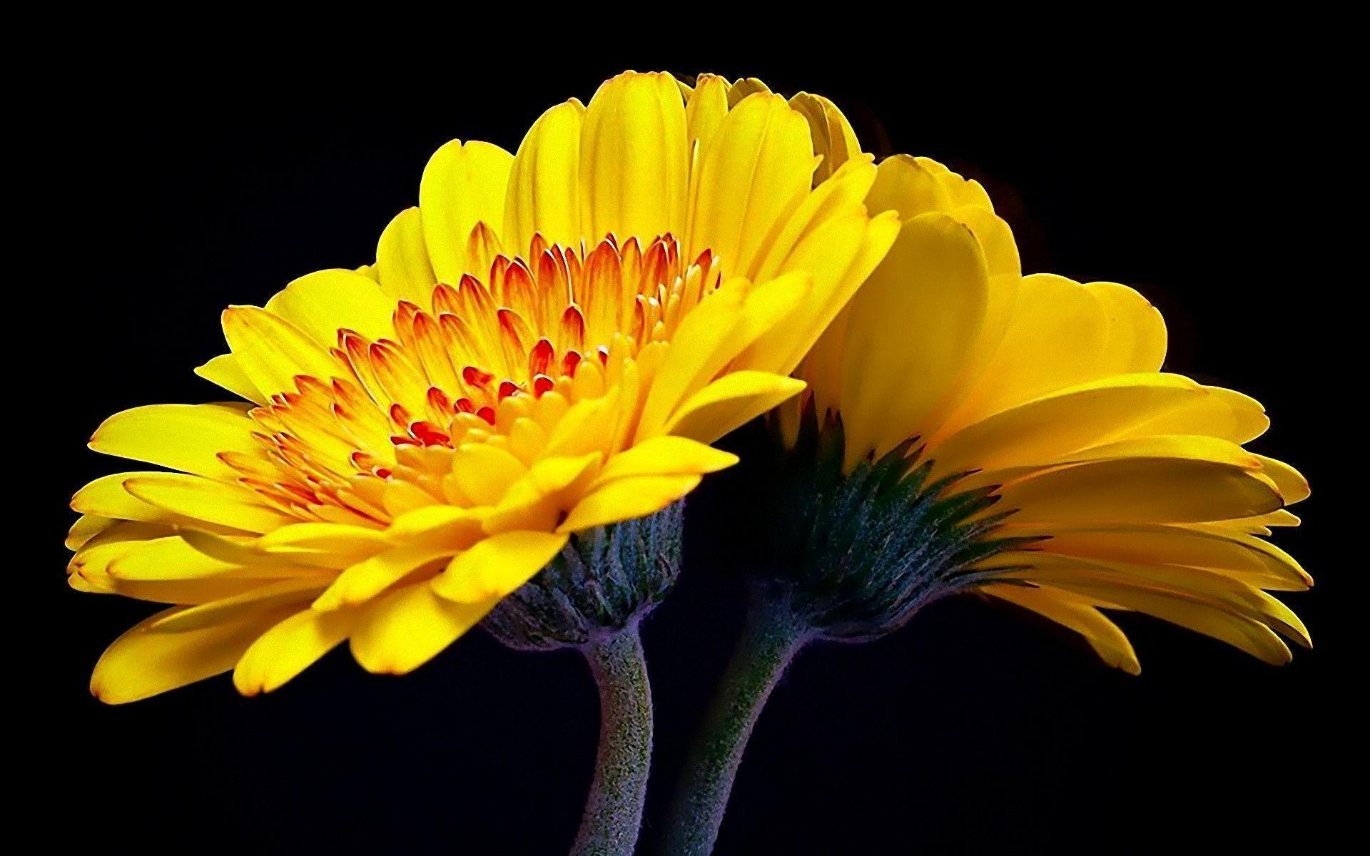super nature Yellow Flowers Wallpaper