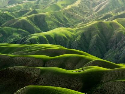 green grass Desktop Wallpapers