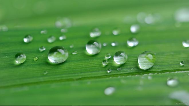 green nature Best Rain Wallpapers