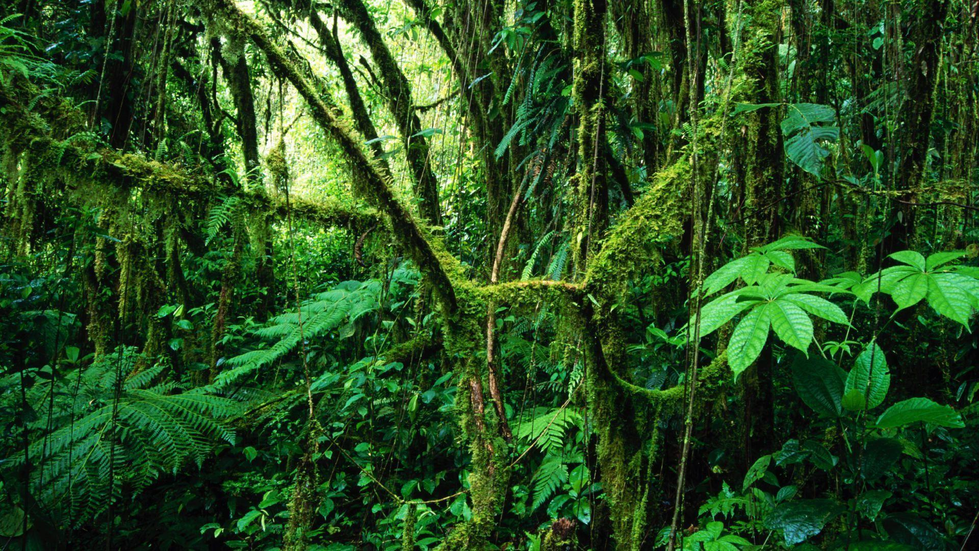 green tree HD Jungle Wallpapers
