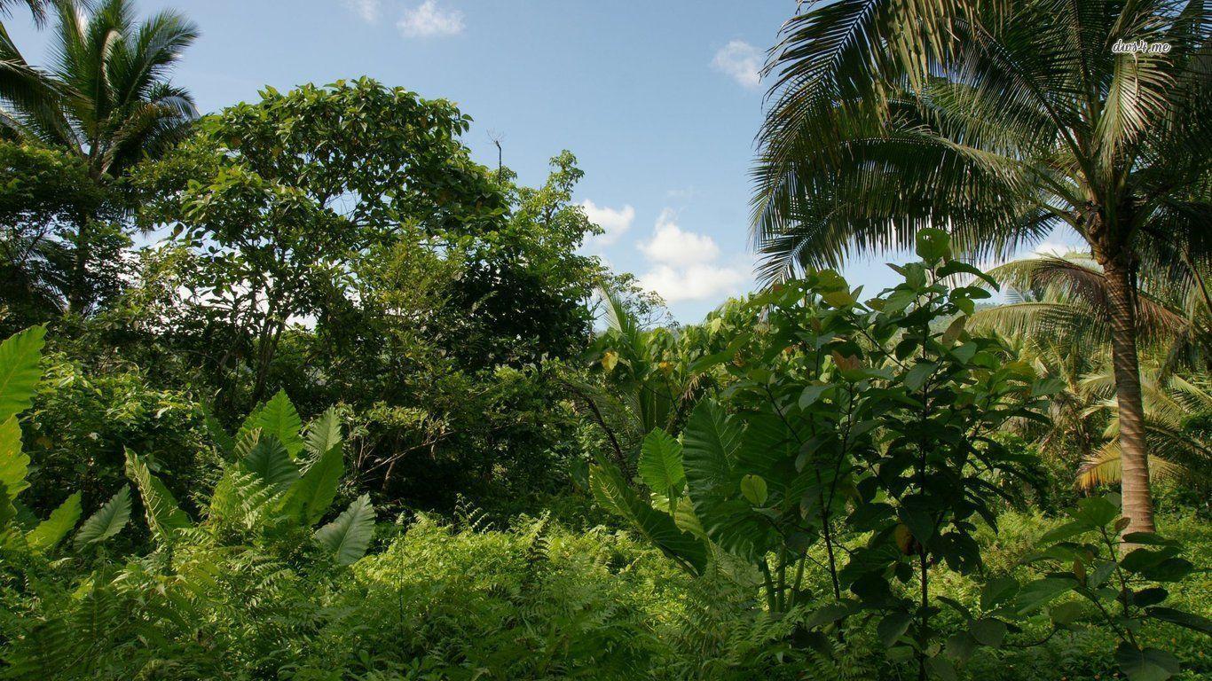landscape HD Jungle Wallpapers