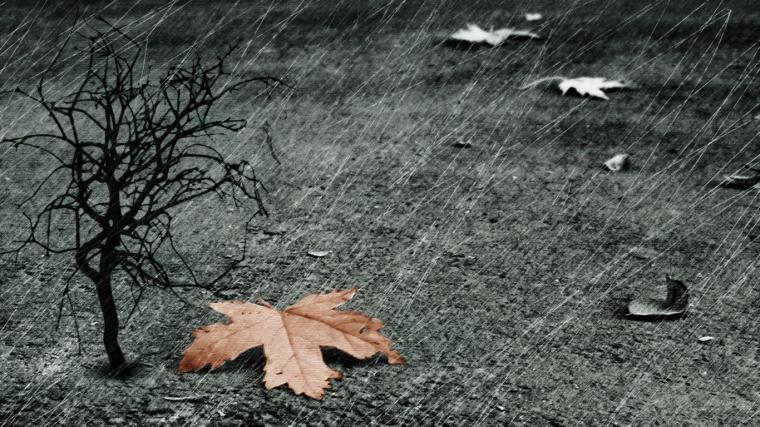 leaf Best Rain Wallpapers