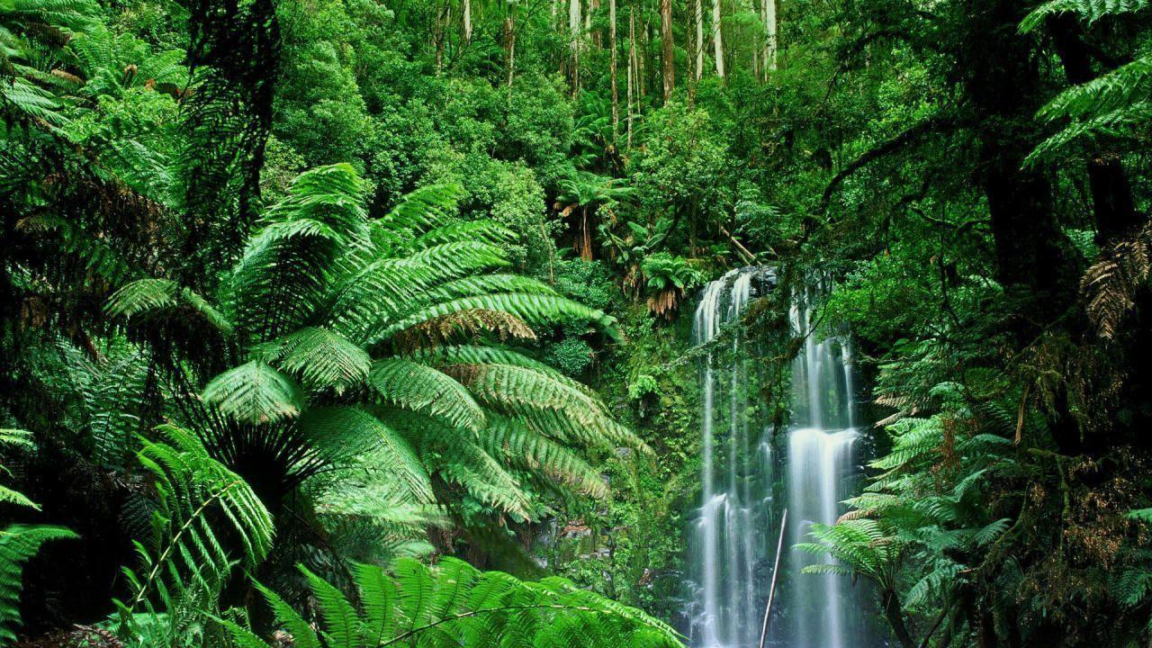 waterfall HD Jungle Wallpapers