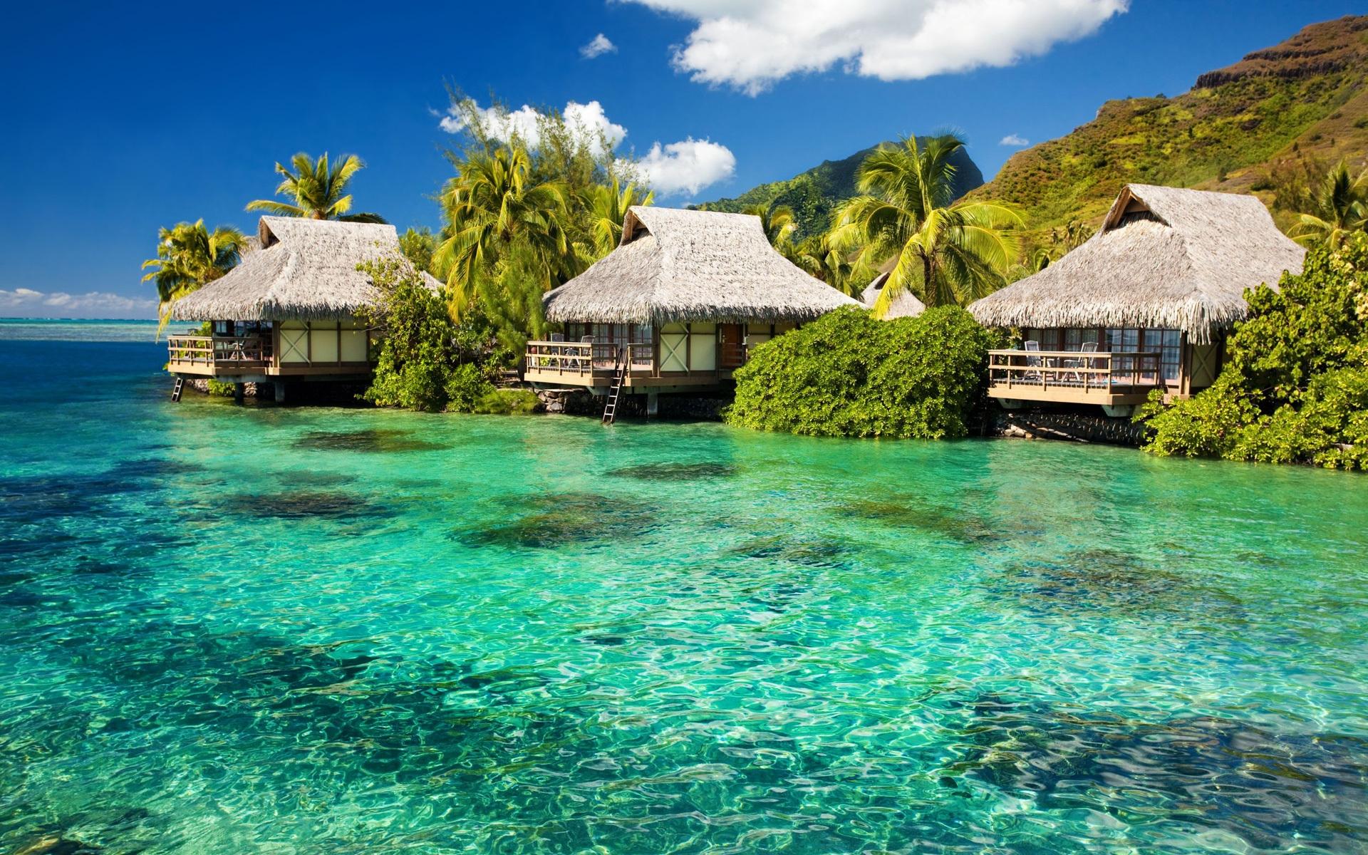 beautiful HD Tropical Wallpapers