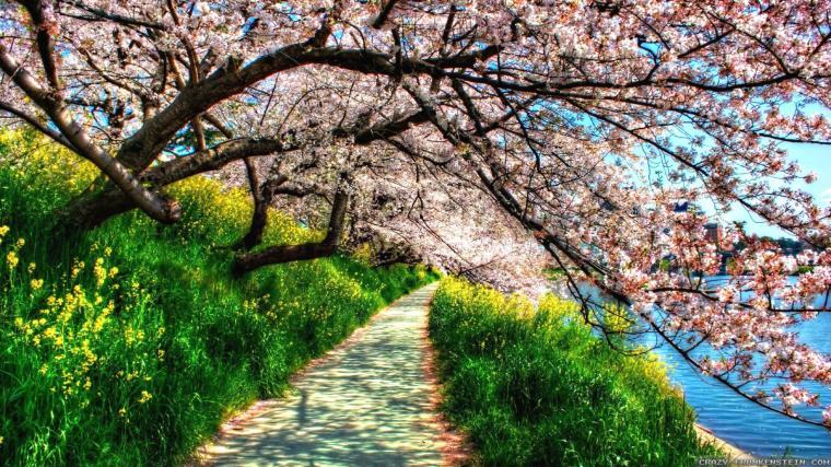 beautiful Spring Wallpaper 4K