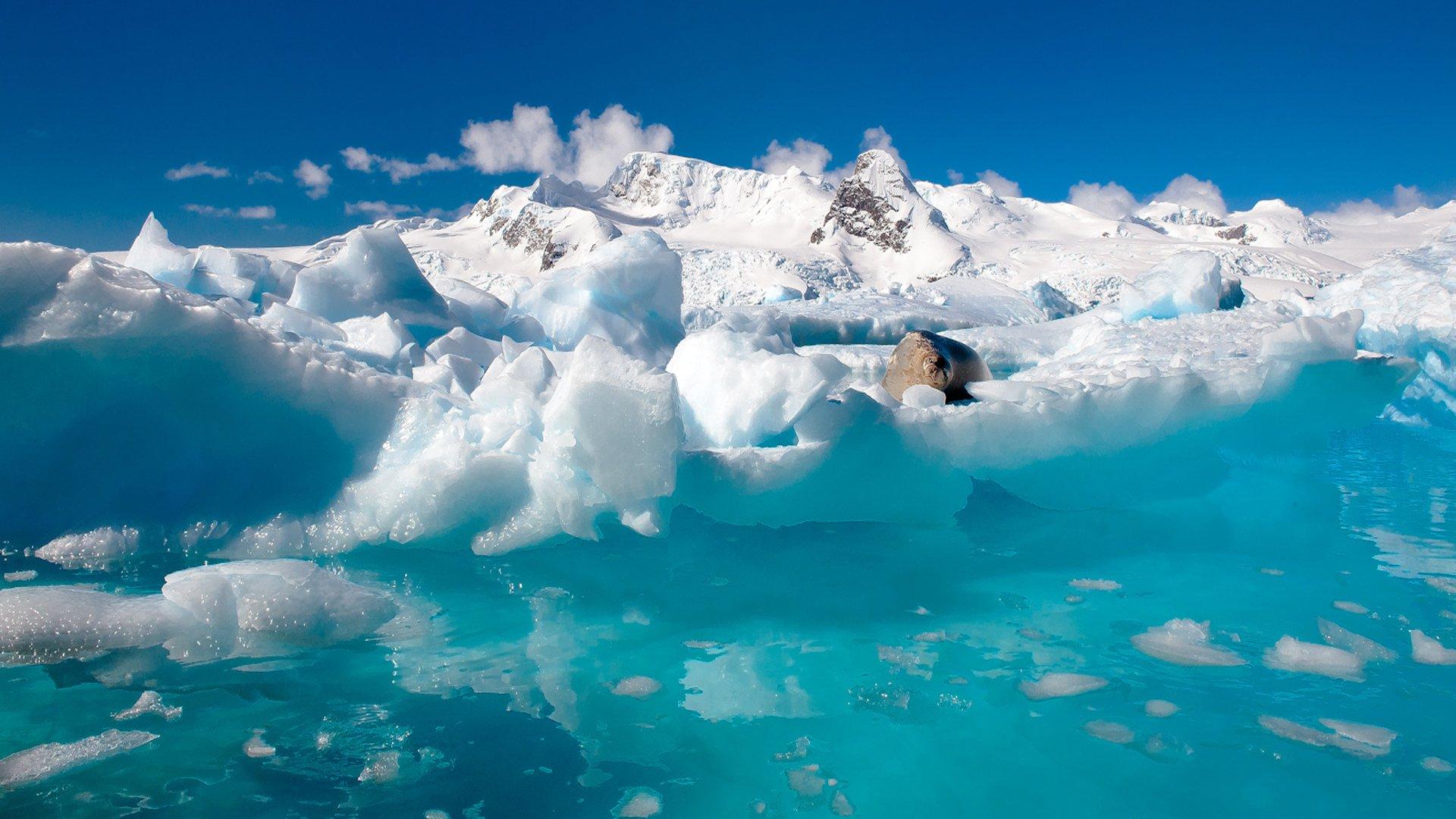 cool nature Antarctica Backgrounds