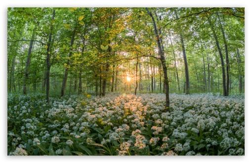 forest Spring Wallpaper 4K