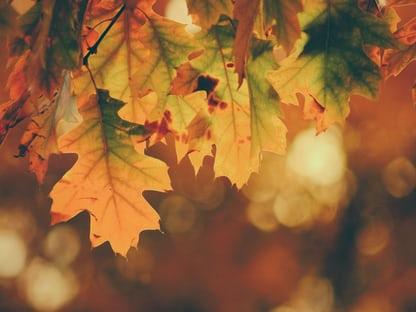 widecreen nature HD Autumn Wallpapers