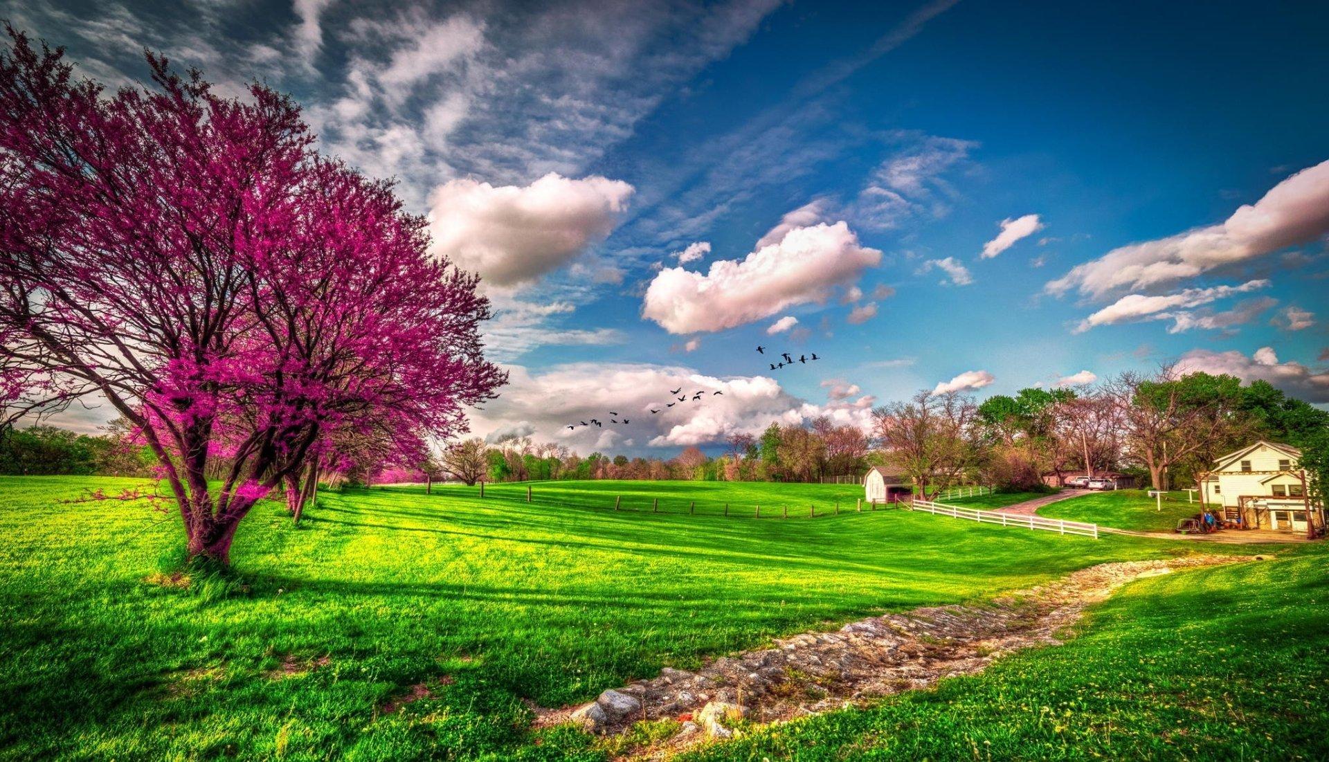 green grass HD Spring Wallpapers