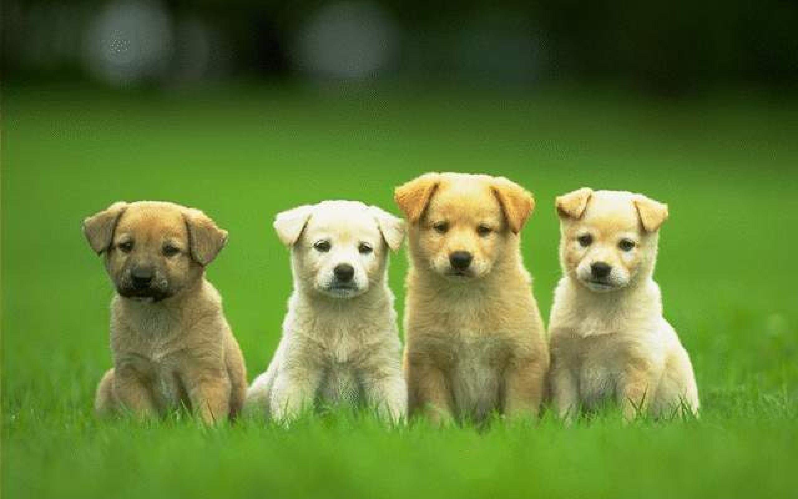 Widescreen Cute Dog Wallpapers