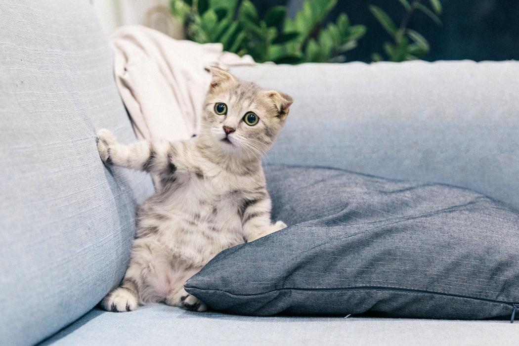 beautiful Cute Cat Images