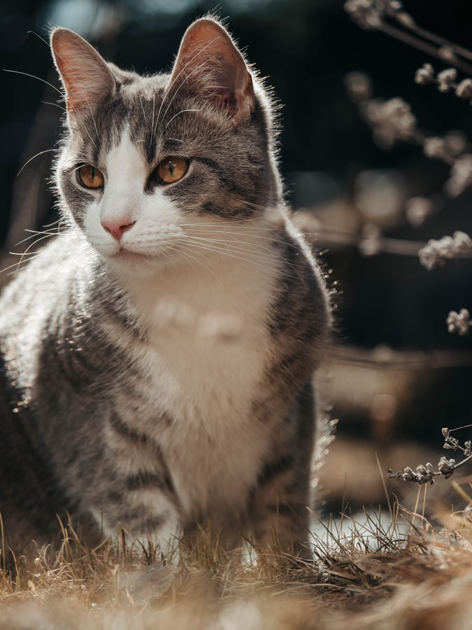 free Cute Cat Images