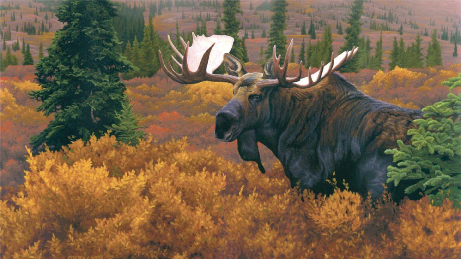 most popular Moose Wallpaper