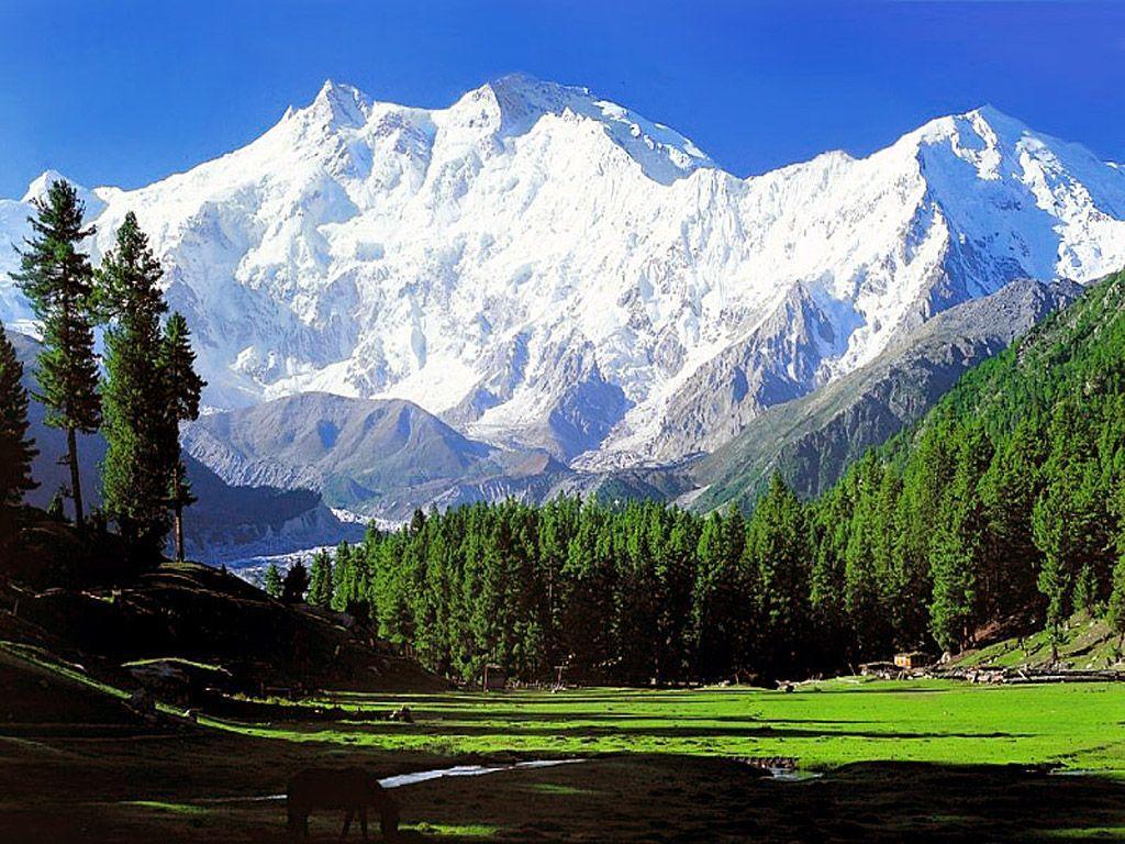 green tree Himalayas Wallpapers 4K