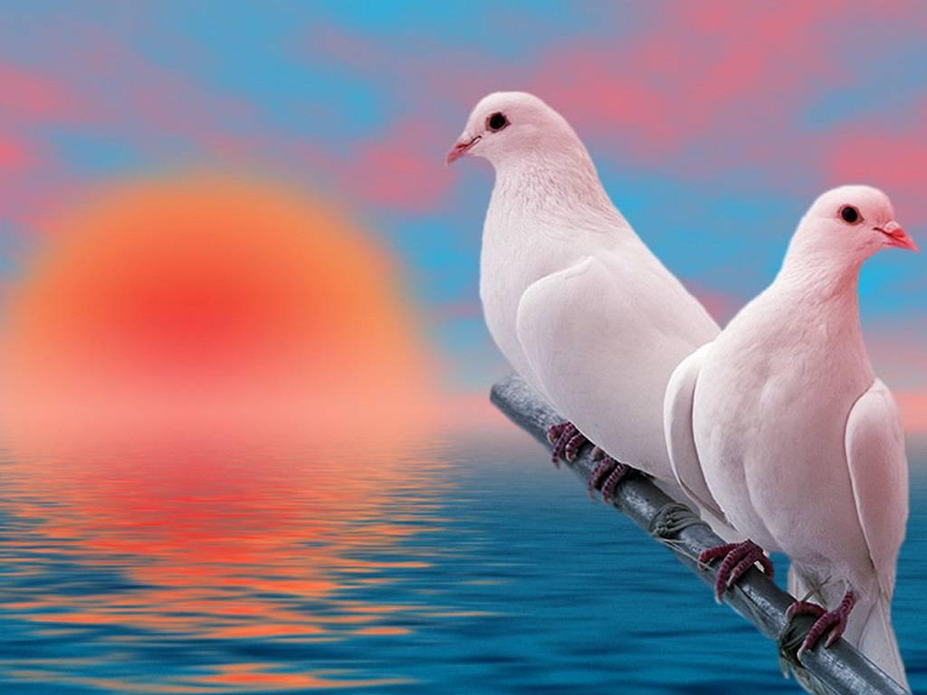 widescreen Lovely Birds Wallpapers