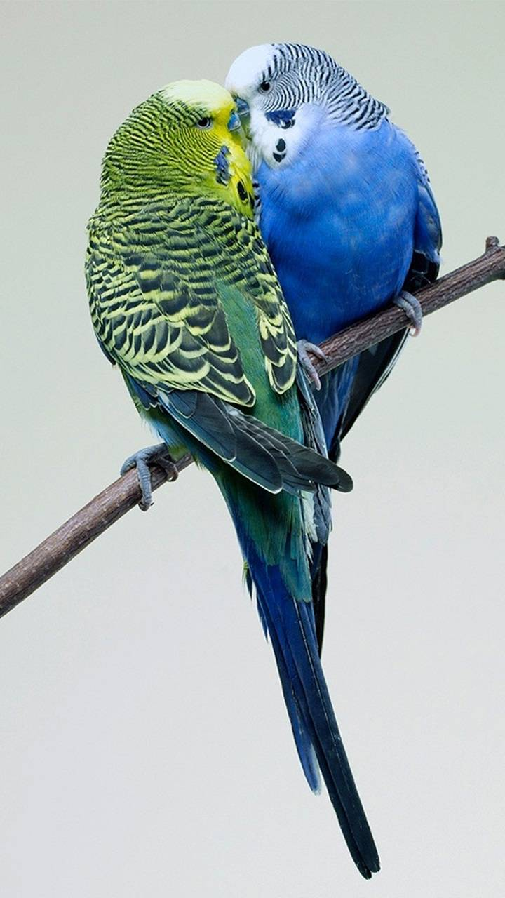 wonderful Lovely Birds Wallpapers