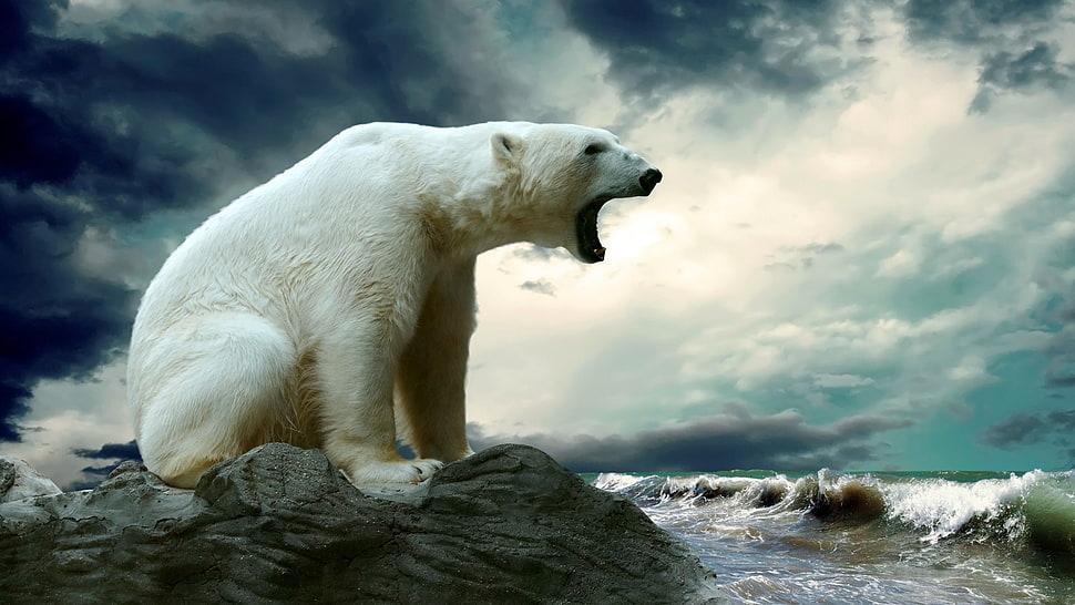 nature White Bear Wallpaper
