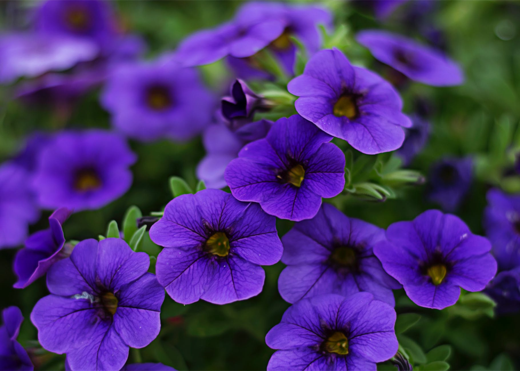 Cool Purple Flowers