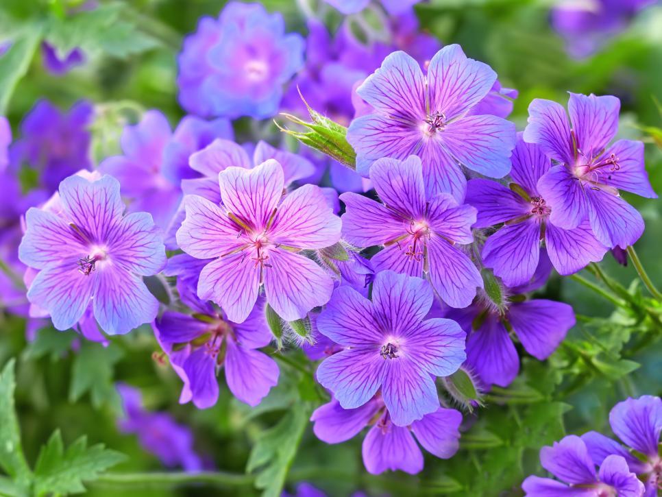 Landscape Purple Flowers