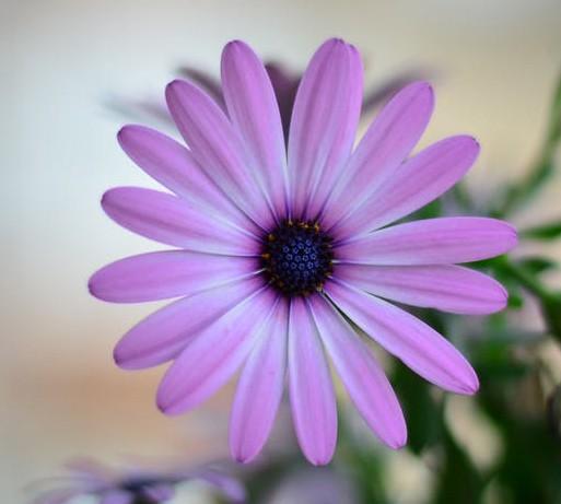 amazing natural Purple Flowers