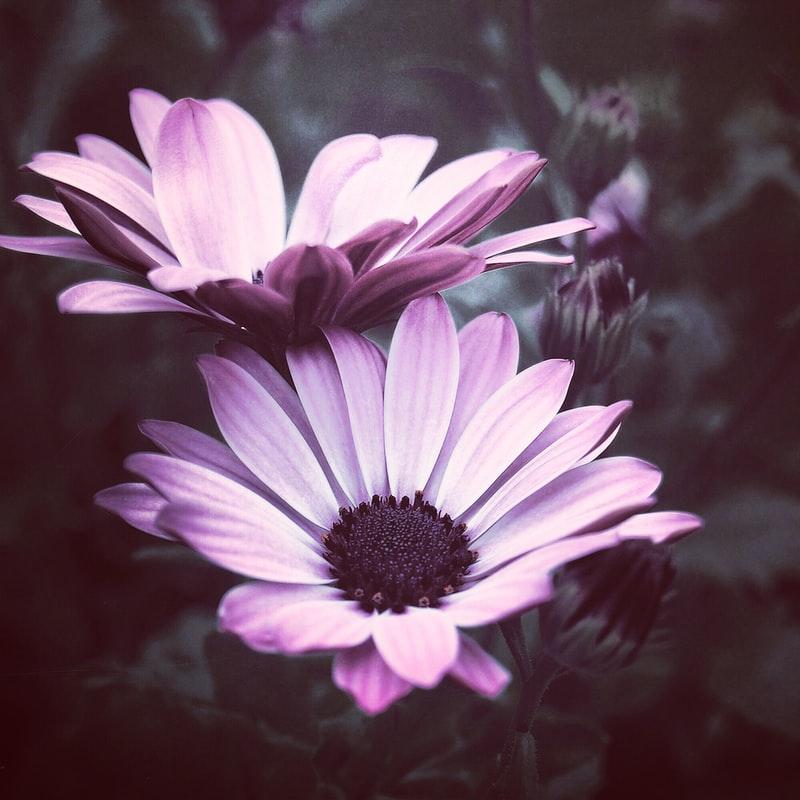fantastic Purple Flowers image