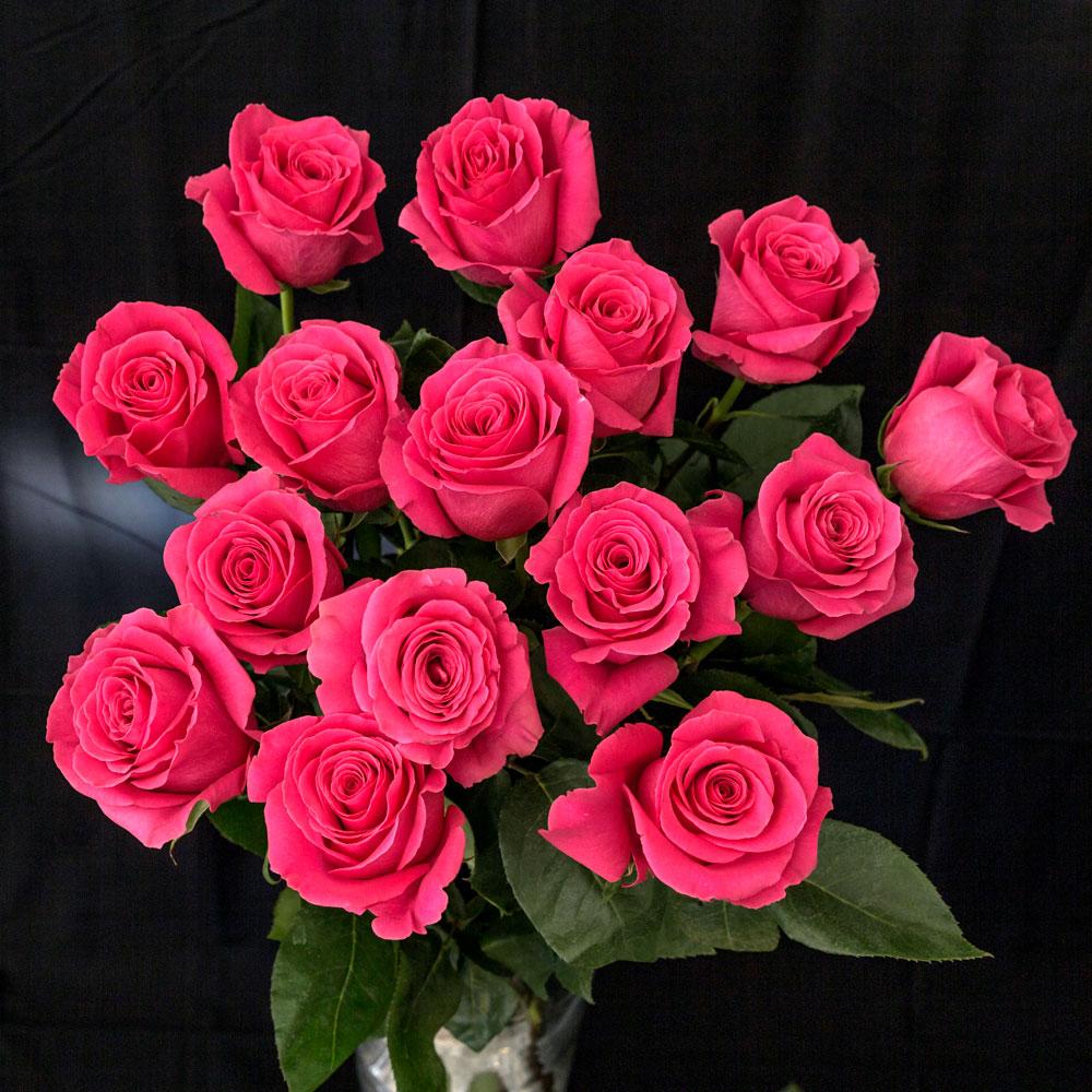 full top natural Pink Roses Images