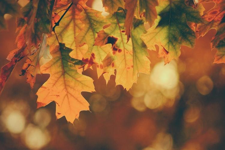 natural leaf Best Autumn Wallpaper